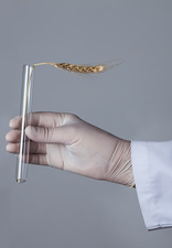 Person holding test tube with ear of wheat