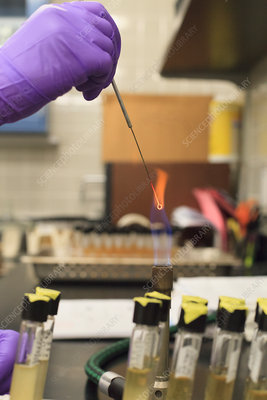 Lab technician holding sample in flame