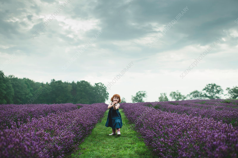 Toddler between rows of lavender, Campbellcroft, Canada