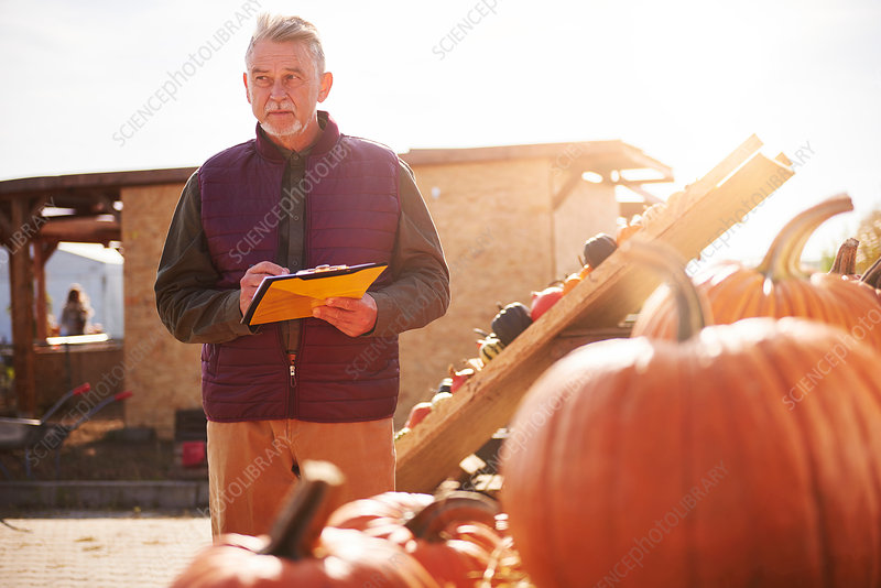 Farmer at pumpkin farm