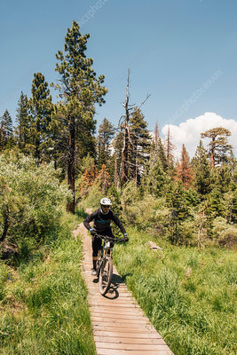 Man cycling on path through forest, California, USA