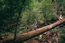Family walking on fallen tree in forest, California, USA