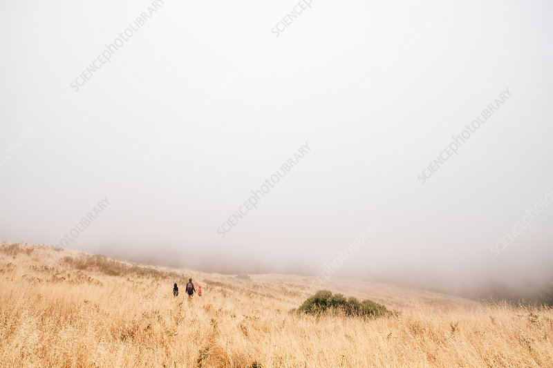Mother and sons walking in misty field, California, USA