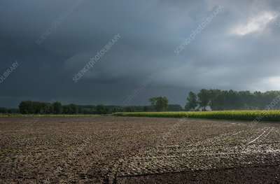 Rain over Flanders fields, Oostkamp, West Flanders, Belgium