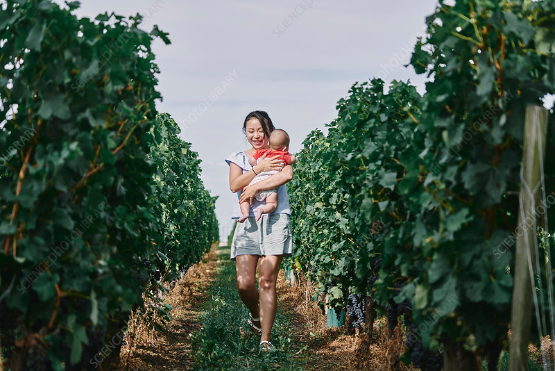 Woman carrying baby girl through vineyard, France