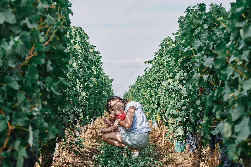 Woman with baby daughter in vineyard, France