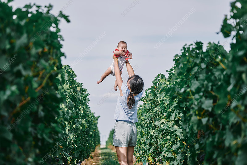 Woman holding up baby daughter in vineyard, France