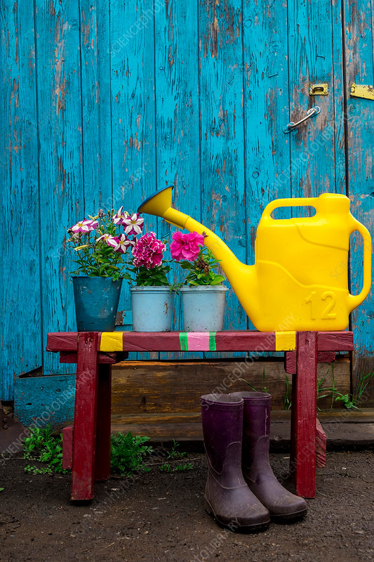Watering can, wellies and pots of plants