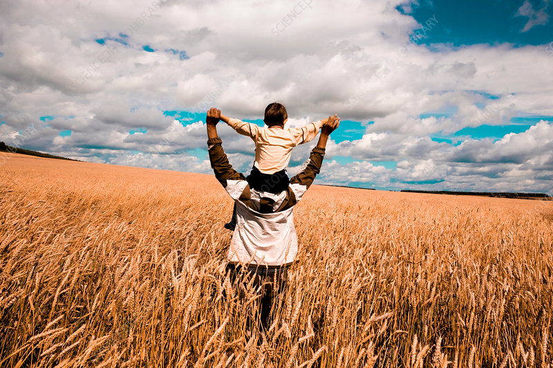 Father carrying son on shoulders in cornfield, Russia