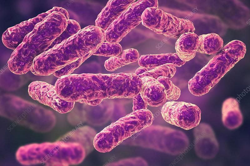 Cat-scratch disease bacteria, illustration
