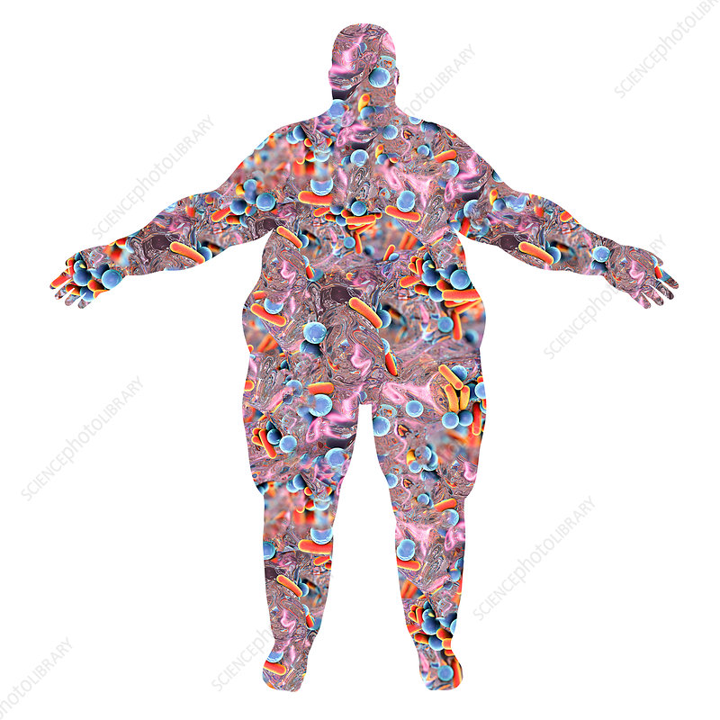 Human microbiome in obese person, illustration