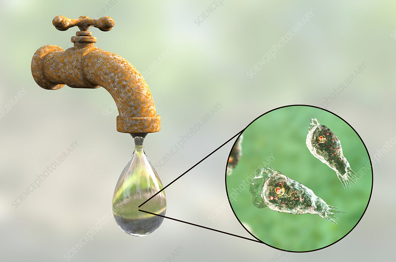 Tap water contaminated by amoeba, illustration