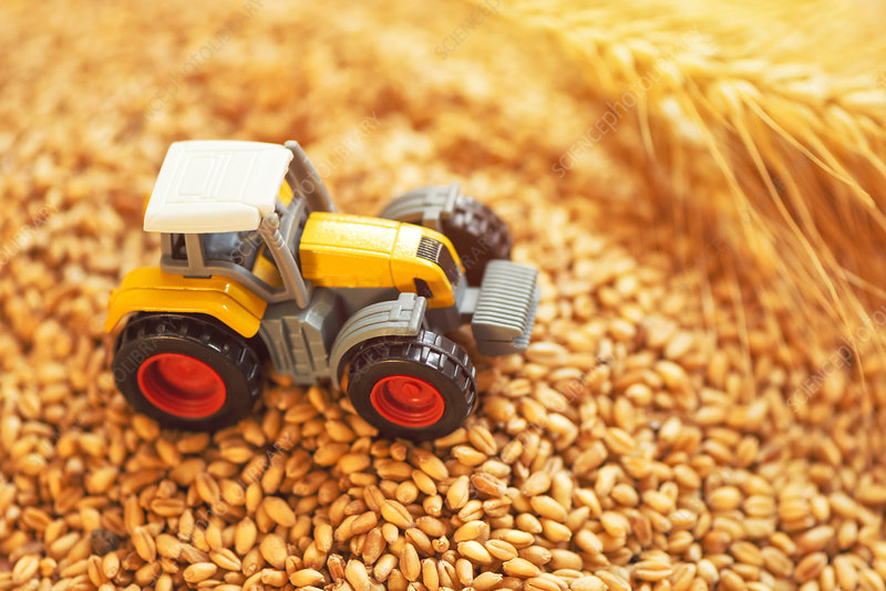 Toy tractor with wheat grains, conceptual image