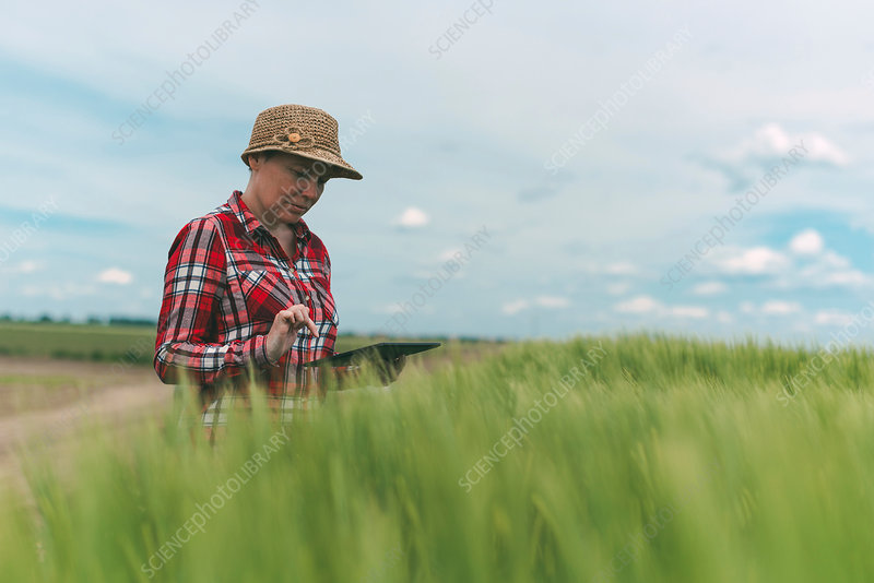 Female farmer using tablet in wheat field