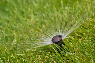Water sprinkler in grass