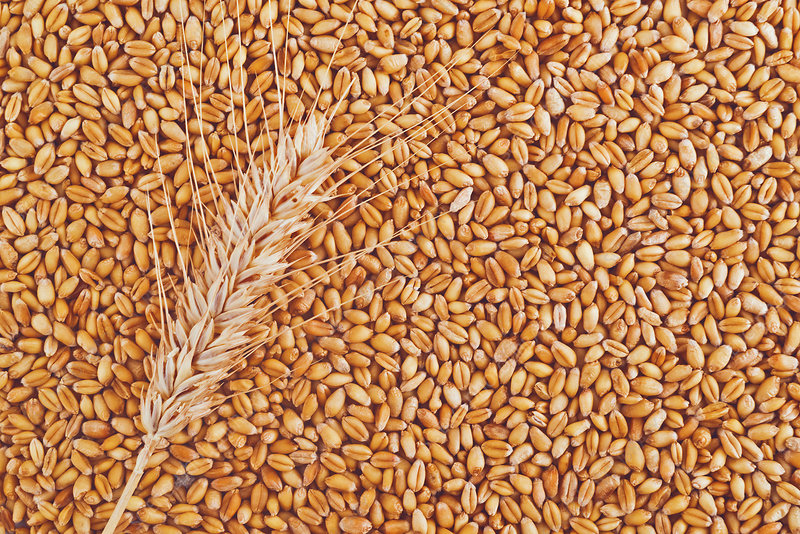 Ear of wheat and grains