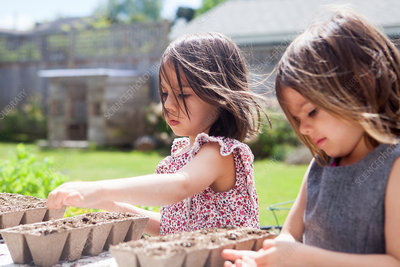 Girl sisters planting seedlings in sunny yard