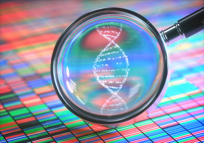 DNA sequencing and magnifying glass, illustration