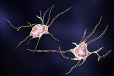 Nerve cells, computer illustration