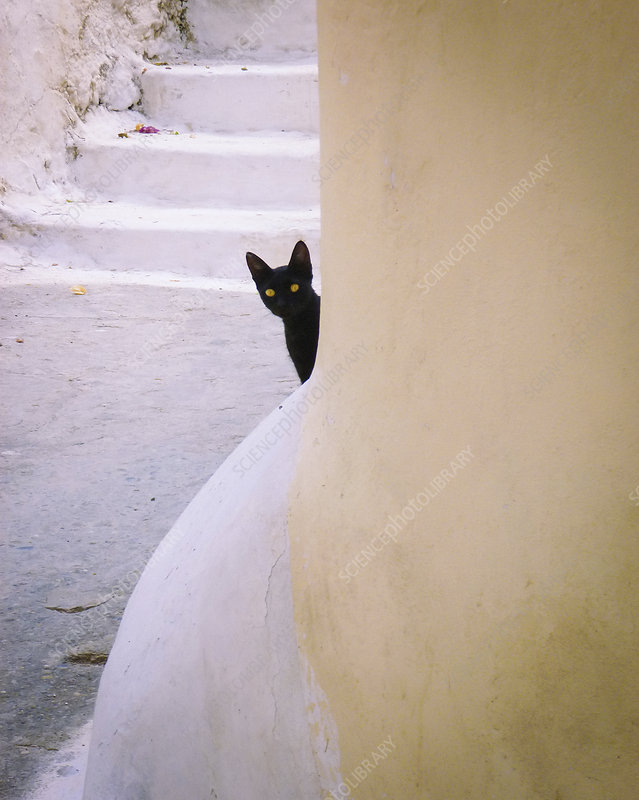 Black cat with yellow eyes peeking out from behind a column