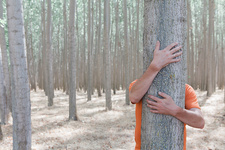 Man hugging a poplar tree, Oregon, USA