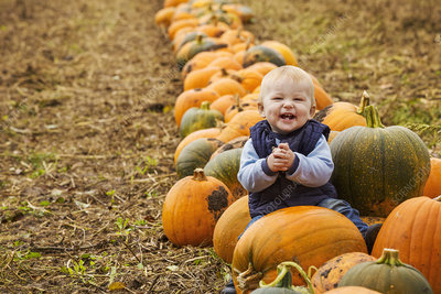 Small boy sitting by colourful pumpkins in field