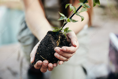 Person holding small plant