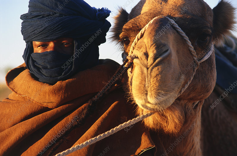 Close up of Bedouin and camel