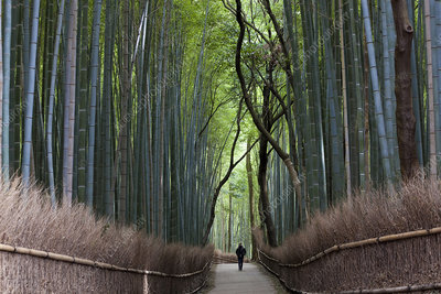 Path lined with bamboo trees
