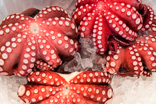 High angle close up of red octopus on ice