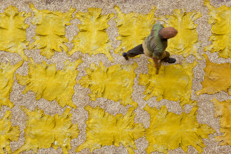 Drying yellow leather hides, North African tannery