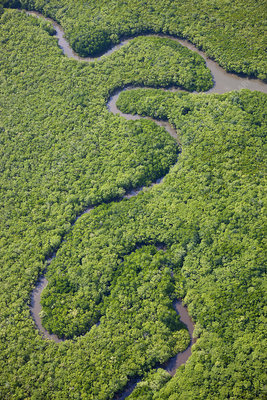 Aerial view of river running through tropical rainforest