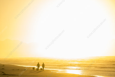 Two people walking dogs on a long sandy beach at sunrise