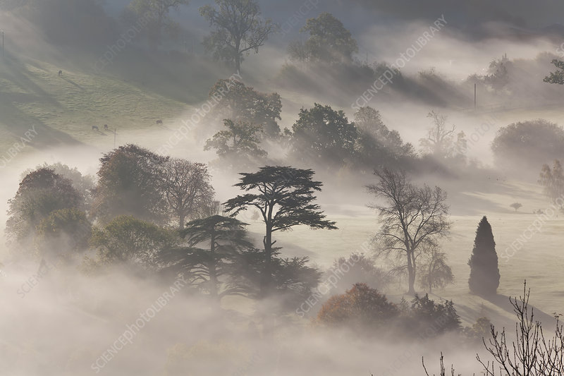 Misty landscape at sunrise