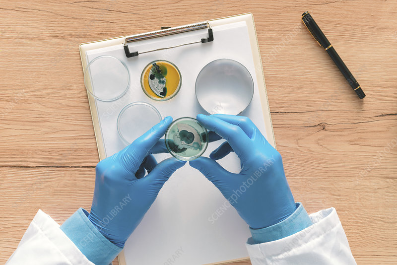 Laboratory technician analysing petri dish