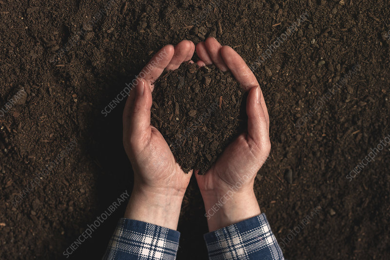 Farmer holding dirt in hands