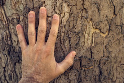 Hand touching maple tree trunk