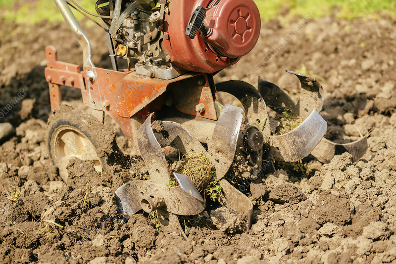 Preparing garden soil with cultivator