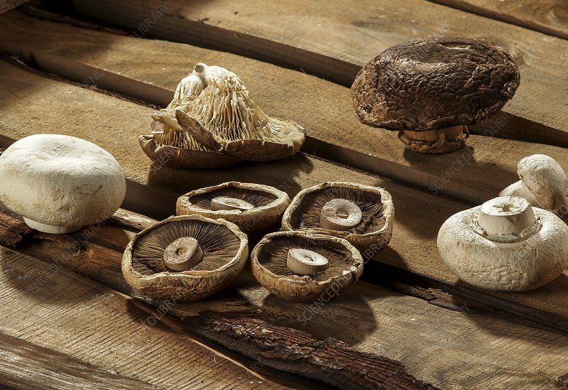 Different types of mushroom