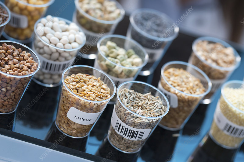 Seeds and cereals in food safety laboratory