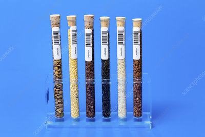 Food samples in test tubes