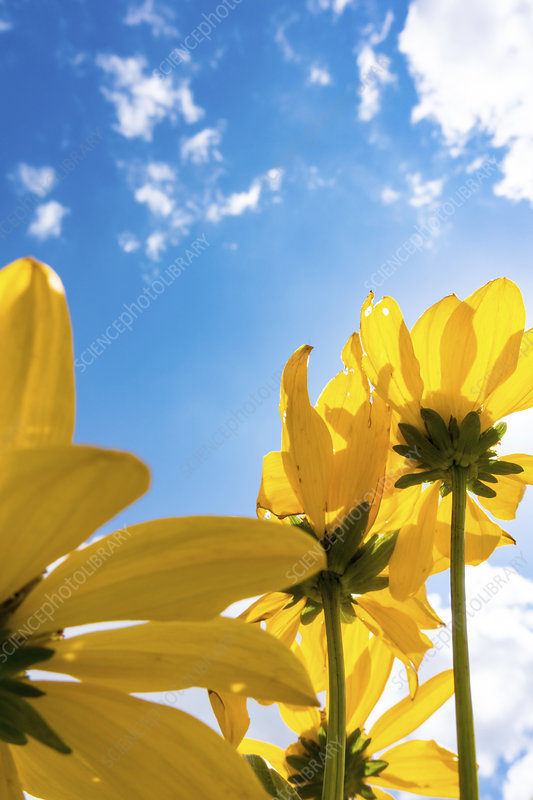 Yellow flowers on sunny day
