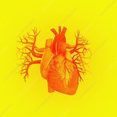 Heart against yellow background, illustration