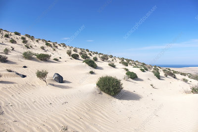 Shrubs on sand dune