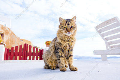 Cat on sun terrace