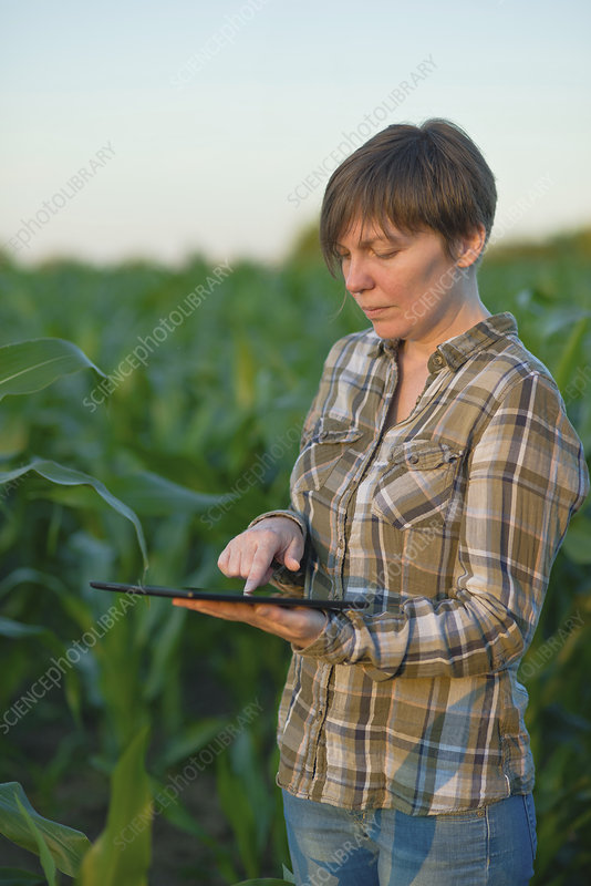 Farmer using digital tablet in field