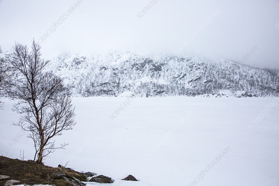 Tranquil, snow covered landscape, Norway