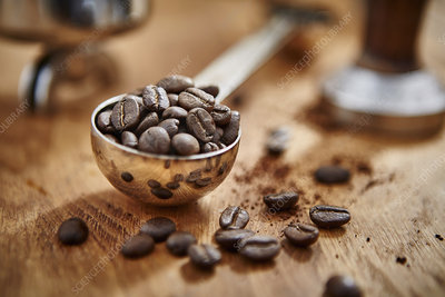 Roasted coffee beans in measuring cup scoop