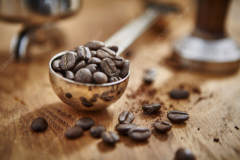 Roasted coffee beans in measuring cup scoop