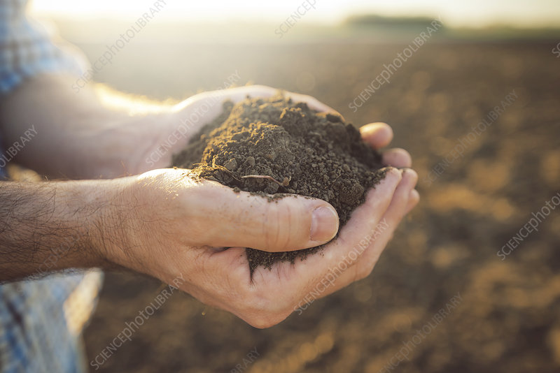 Farmer holding pile of soil